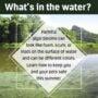 August 2021 EPA Update: HABs